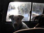 Luna. A l'arrière du truck, Loogy et Chewy.