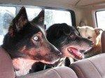 Magellan, CJ et Doc côté passagers, se demandent où on les emmène.