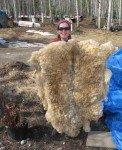 La peau de mouton de l'année dernière. Je la fais sécher au soleil. Elle a passé l'hiver accroché au pan Nord de l'établi et a pris de la poussière. Elle sent fort le mouton et il faudra sûrement que je la lave bien avant de pouvoir m'étaler dessus!