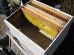 La ruche avant l'arrivée des abeilles. Matt replace les rayons une fois la colonie versée dans la ruche.