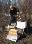 Matt verse une partie de la colonie dans la ruche.