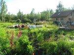 Jardin en friche où Matt a planté des fleurs sauvages.