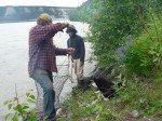 Matt passe une corde à travers la bouche et les branchies du saumon pour l'attacher. On attache la corde à un arbre et le poisson reste dans l'eau jusqu'au départ.