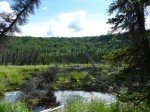 Petit étang au milieu de la vallée. En son milieu, une belle hutte de castor.