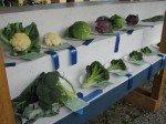 Brocolis, choux-fleurs, carottes et autres légumes de saison s'exposent le temps d'un week end.