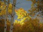 Rayon de lumière sur les feuilles d'or sur fond de ciel d'orage.