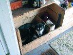 Gobi pense que la caisse pour le bois est sa nouvelle niche!