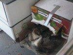 La nouvelle niche de Sherley! Pas aussi chaud que de la paille, mais elle préfère rester devant la porte, alors Matt lui a conçu un petit abri!