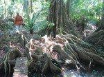 Dans la forêt tropicale, à deux pas de l'éco lodge