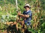 Don Jorge récolte de la yuca, sorte de pomme de terre dense, très bonne.