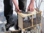 Matt ouvre la boîte pour récupérer la reine d'abord. La boîte de conserve contient de l'eau sucrée, les abeilles s'alimentent ainsi via de petits trous perçés.