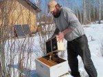 Matt verse les abeilles par dessus la reine, préablablement déposée au fond de la ruche, dans sa petite boîte.