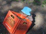 Timothy aide à la récolte d'épinards.