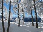 Les arbres sont charges de neige.