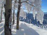 Des tonnes de neige suspendues dans les branches.