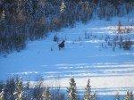 Encore un elan dans le lac en contre bas. Cette fois il s'enfuit, entendant l'echo des aboyements.