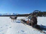 Notre equipage. Les chiens sont exites, il leur faudra un moment avant de s'installer dans la neige.
