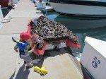 Le dessous de notre annexe, habitée par des centaines de moules! Gros nettoyage de printemps!