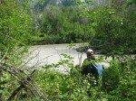 En arrivant à la rivière, végétation luxuriante qui rend l'accés à la rivière difficile.