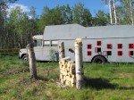 Coupe de printemps. Les troncs encore sur pied serviront un jour de cabane pour Timothy.