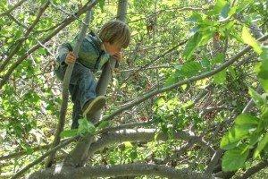 0051 Timothy tree monkey